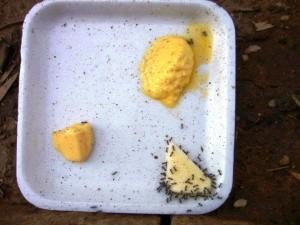 マーガリンとバターの違いを蟻は知っているんです。 出典:http://holisticfaith.com/healthy-living/are-ants-smarter-than-humans/