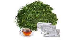 タンポポ茶1kg